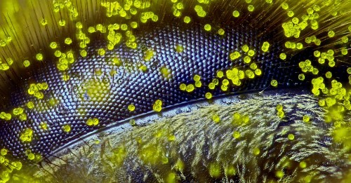 10 Incredible Images Of The Tiny World Around Us | Popular Science