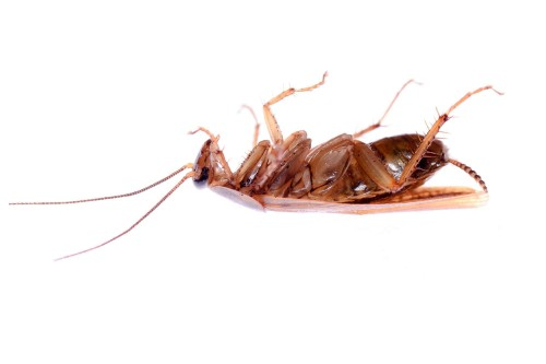 Six pest-removal myths that need to be exterminated