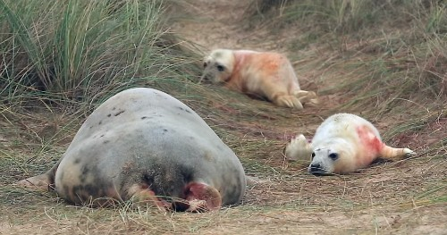 Wild Seal Pup Twins, The Solar Eclipse Seen From Space, And Other Amazing Images Of The Week