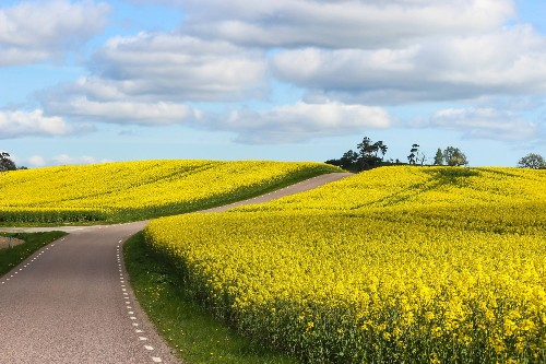 Plants Could Pave The Way For Greener Roads