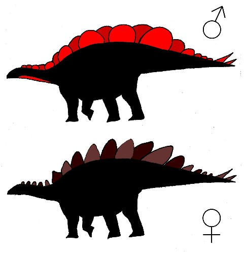 Male And Female Stegosaurus May Have Had Different Plates