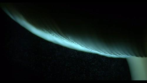 Big Pic: Mushrooms Make Wind To Send Spores Flying