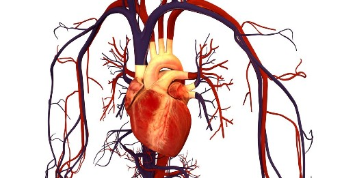 A Genetic Mutation Could Save You From A Heart Attack | Popular Science