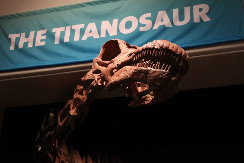 AMNH's Titanosaur Fossil And Blue Whale Fossil Have Been Texting Each Other