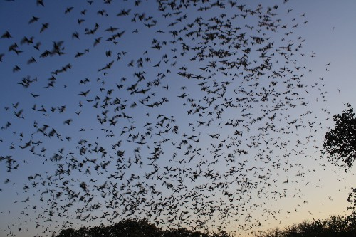 To Save Birds And Bats, Create Wildlife Refuges In The Sky