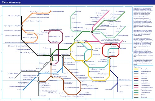 A Subway Map Of The Metabolism [Infographic]