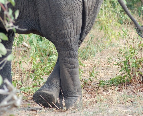 How Fast Does An Elephant Pee?