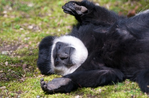 5 Reasons To Celebrate Colobus Day