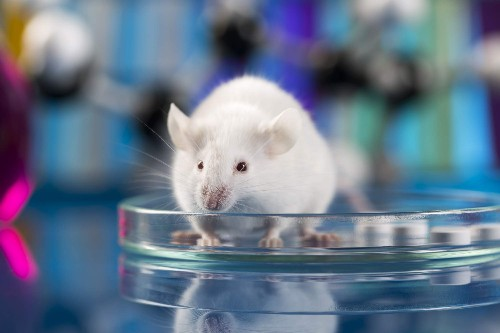 Flickering light seems to help mice with Alzheimer's-like symptoms