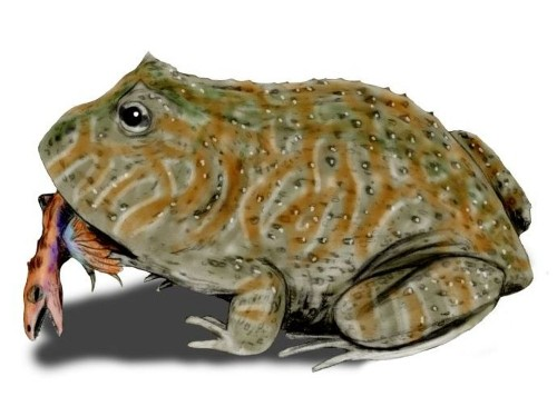 Giant ancient frogs might have snacked on baby dinosaurs