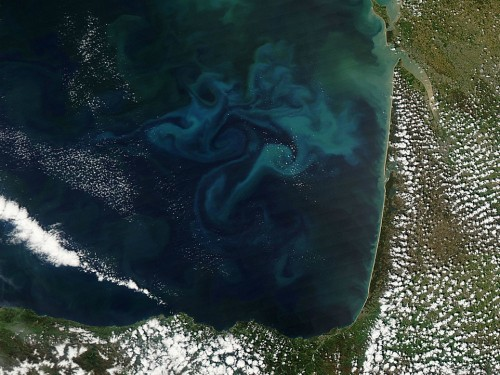 Big Pic: The Prettiest Aerial Shot Of Phytoplankton You've Ever Seen