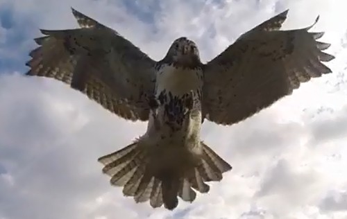 French Researchers Bother Birds With Drones, For Science
