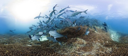 See Coral Reefs Like Never Before Thanks To Gorgeous New Panoramas