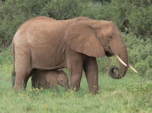 Carbon Test Determines Whether A Piece Of Ivory Is Legal Or Illegal