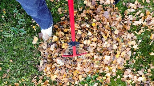 The best way to deal with fall leaves