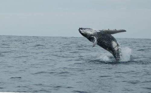 New Zealand Creates Massive New Marine Sanctuary