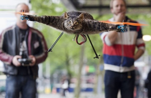 Video: Dutch Artist Turns His Dead Cat Into a Flying Quadcopter