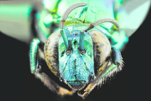 15 Bee-utiful Pictures Of Bees