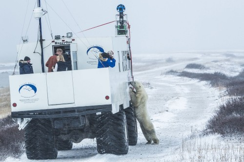 The Week In Numbers: The Top Speed Of A Polar Bear, Quark Mystery Solved, And More