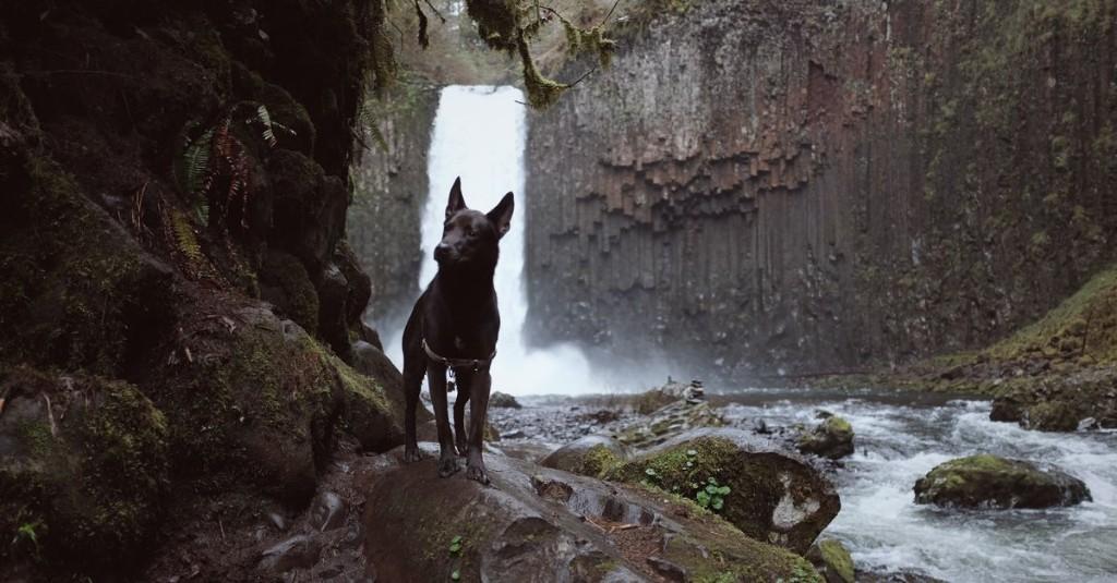 Dogs - Titel