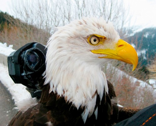 In New Movie, Birds Are The Cinematographers