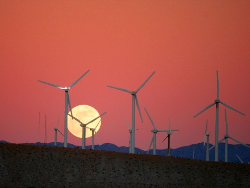 Wind Turbines Kill More Than 600,000 Bats A Year. What Should We Do?