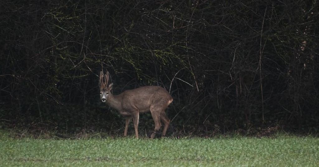 How to pick the right wildlife trail camera