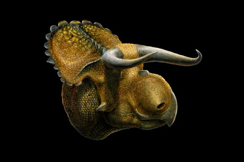 New Dinosaur Species Found In Utah Totally Looks Like A Cow