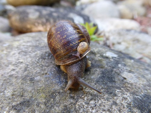 Jeremy the lefty snail has now been rejected by two other lefty snails