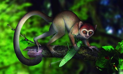 The Week In Numbers: World's Oldest Primate, Big Bang Mystery Solved, And More