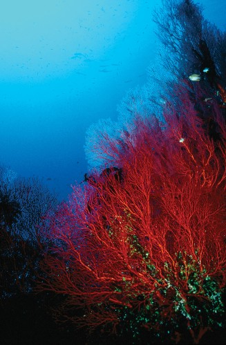 Why Some Coral Reefs Might Survive Climate Change