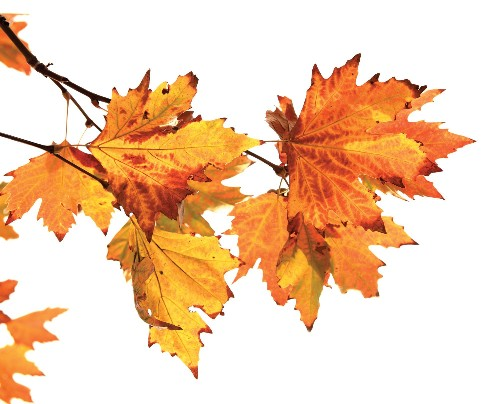 FYI: Why Do Leaves Turn Different Colors?