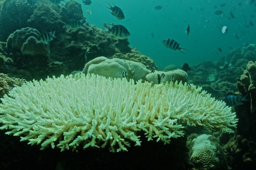 Coral reefs might be in more trouble than we thought