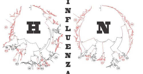 Talking Flu? Best To Mind Your H's & N's