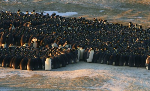 Video: The Physics Of Emperor Penguin Huddles