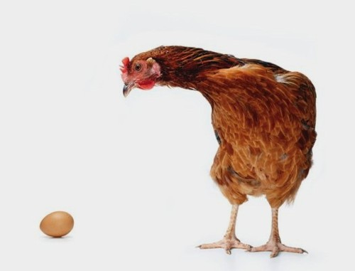 FYI: Which Came First, The Chicken Or The Egg?