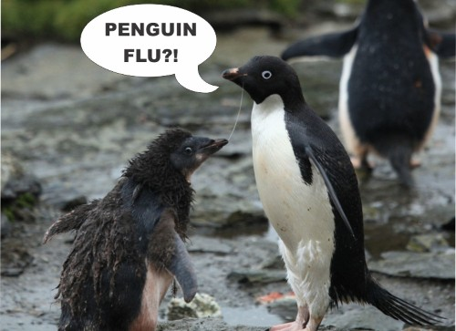 What Penguins Can Teach Us About Flu Pandemics