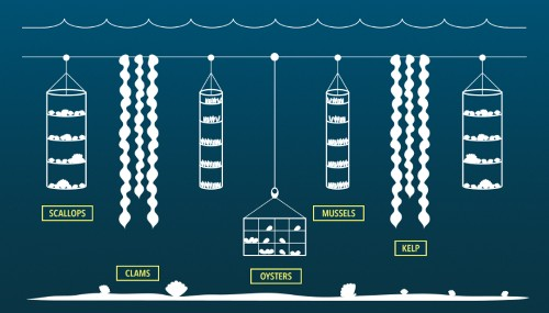 Could underwater farming feed the world?