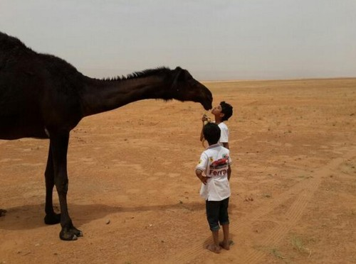 Why People Are Kissing Camels On Social Media