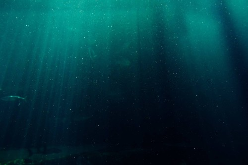 As oceans grow more acidic, they're eating away at their protective floors