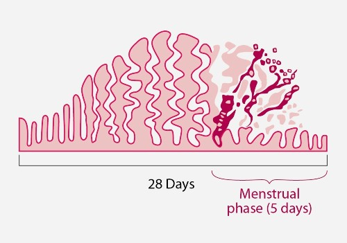 FYI: Why Do I Poop More When I Have My Period?