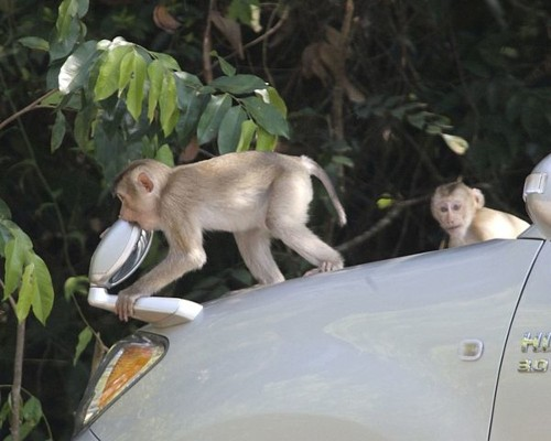Drones Are Tracking Monkeys To Spot Malaria Outbreaks