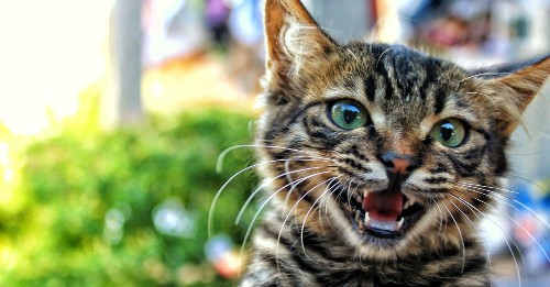 You really shouldn't declaw your cat. Do this instead.