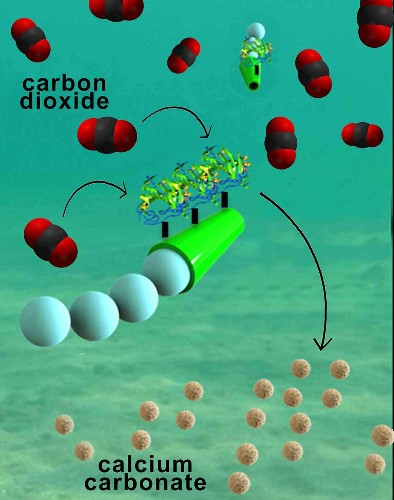Tiny Motorized Robots Can Clean Carbon Dioxide Out Of Seawater