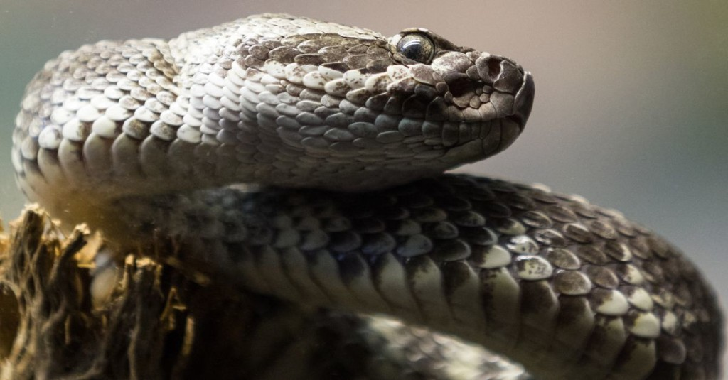 Certain weather makes you more likely to get a rattlesnake bite