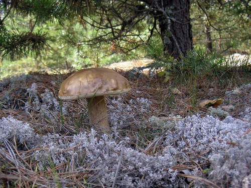 Mushrooms Are Helping Purify Dirty Waters
