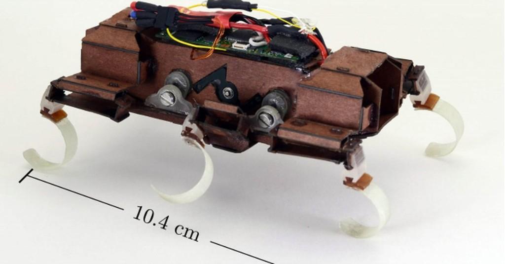 Watch This Super Fast Robo-Roach Launch A Robot Bird