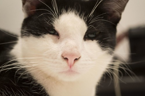 If Cats Could Speak Human, What Would They Say?