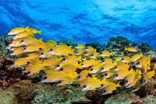 The hidden fish keeping coral reefs alive