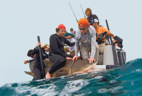 The Quest To Uncover The Secret Lives Of Sharks